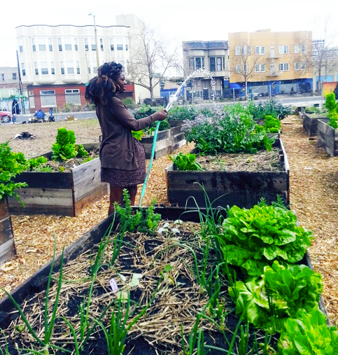 46 BLACK OWNED FARMS AND GROCERY STORES TO SUPPORT - Black