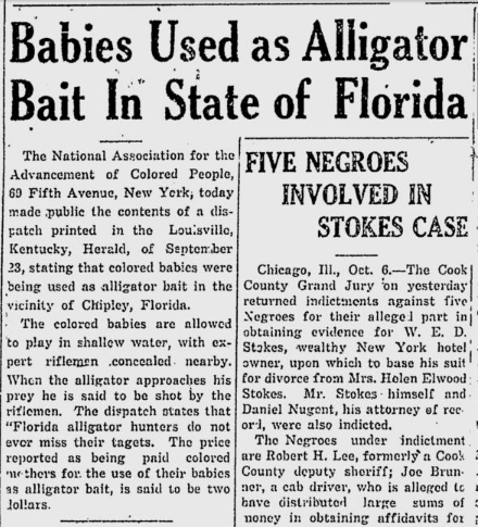 babies-used-as-alligator-bait